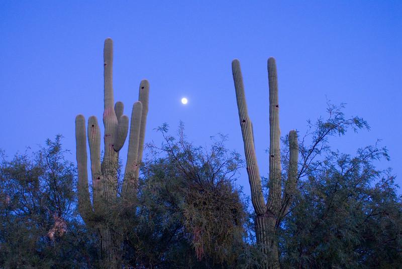 10.23.2007 -- Moonrise over the Sonoran Desert