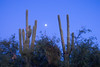 10.23.2007 -- Moonrise over the Sonoran Desert