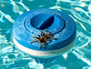 8.14.2007 -- A Tarantula that somehow found itself on the chlorine dispenser in our family pool.  It was gently repatriated with a skimmer net.