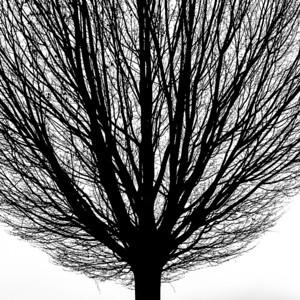 Tree silhouette 6