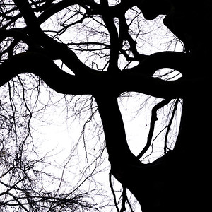 Tree silhouette 12
