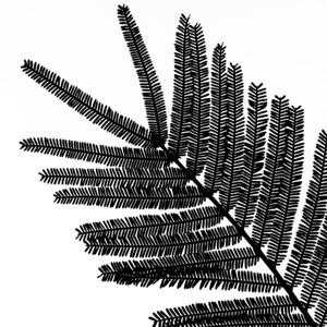 Tree silhouette 14