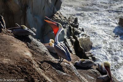 Morning Pelican Streches.