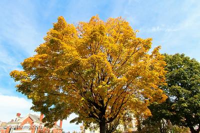 Fall 2013 in Richmond, Virginia