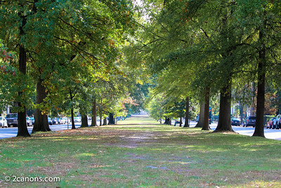 Tree lined median in Richmond, Virginia