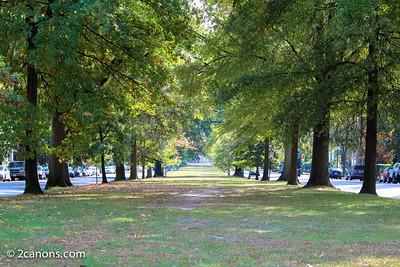 Tree lined median in Richmond, Virginia