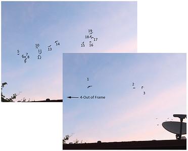 Parrot Census 8/15/18