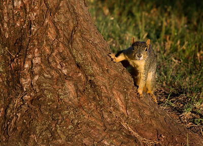 Candleridge Park Squirrel #1