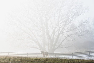 White Horse In Fog