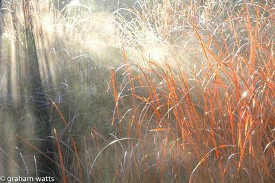 light rays through orange grass