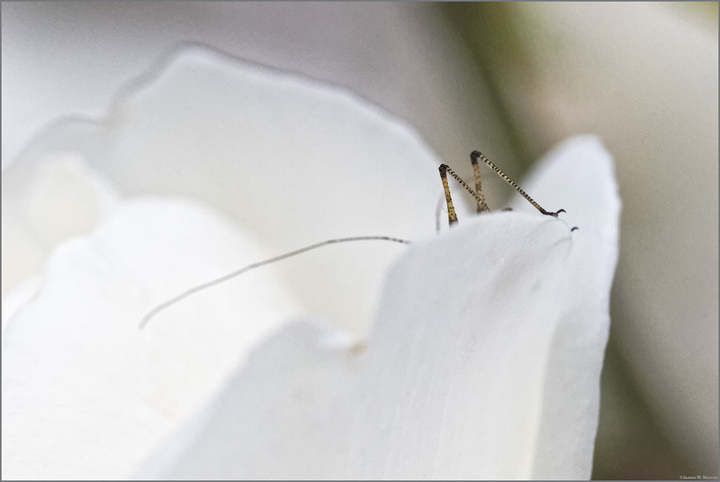 Bug Exploration, #8104-7DII