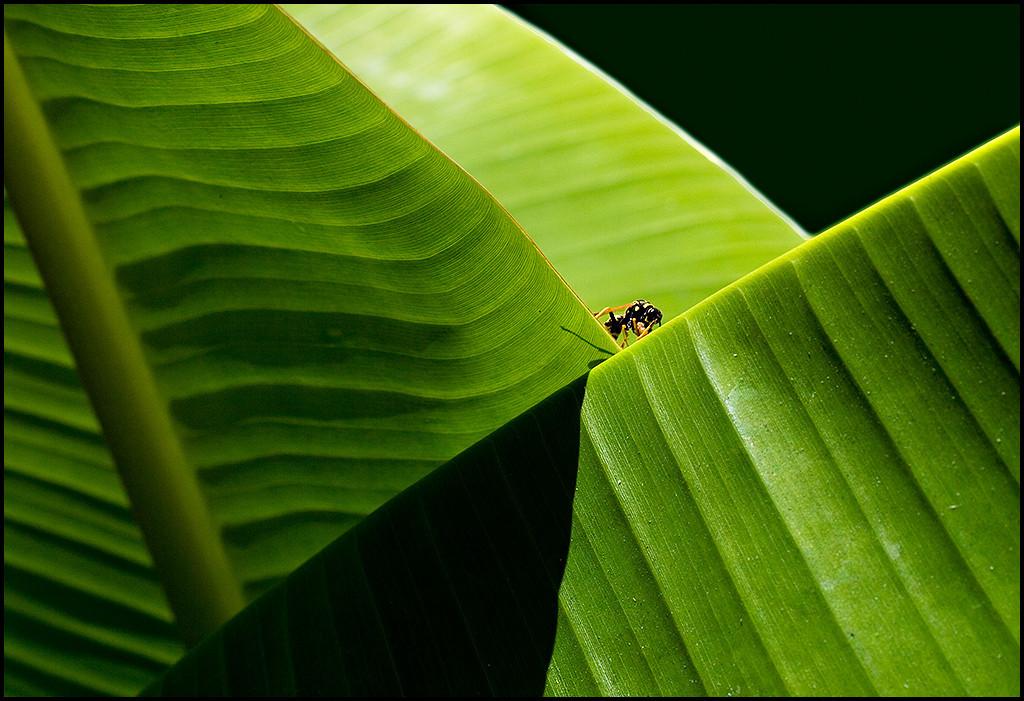 <center><i>(Green) Hornet</i>, #9601</center>