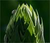 Cacti Ascension  .... [7D11.8486.2017]