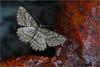 <center><i>Floating Moth and Leaf,  </i></center>#1783-7D