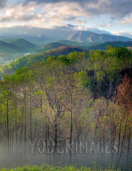 Still #SmokiesStrong, Great Smoky Mountains National Park
