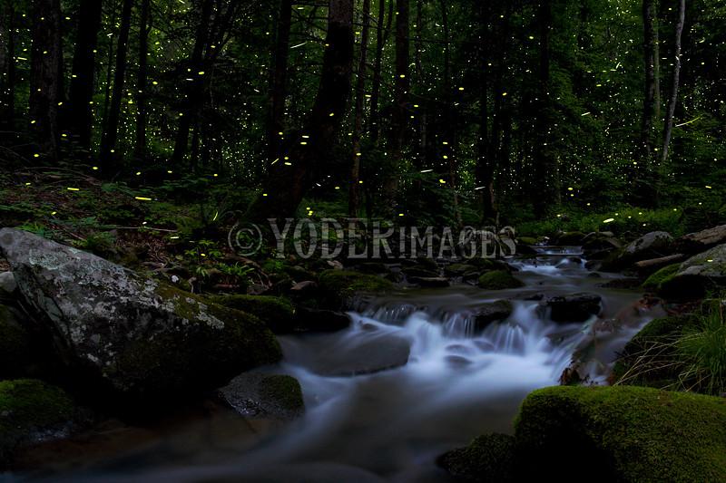 Lightning Bugs near a small cascade, Great Smoky Mountains National Park.