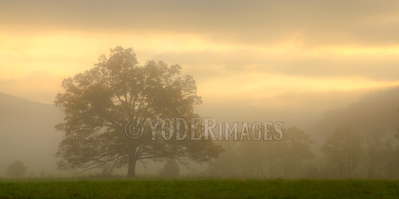 The Tree, Cades Cove, Great Smoky Mountains National Park