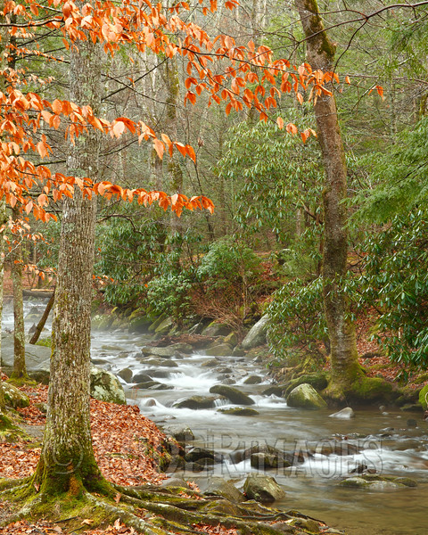 Abrams Creek, Cades Cove, Great Smoky Mountains National Park