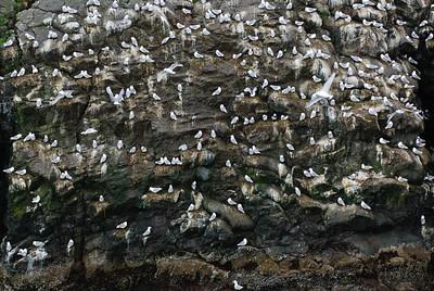 Wall O' Birds
