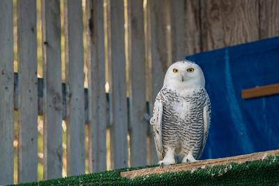 Bird Treatment & Learning Center Flight Center on April 22, 2015.