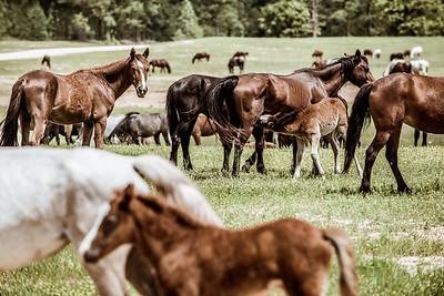 Wild horses - April 2017