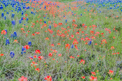 Texas Wildfowers - March 2017.