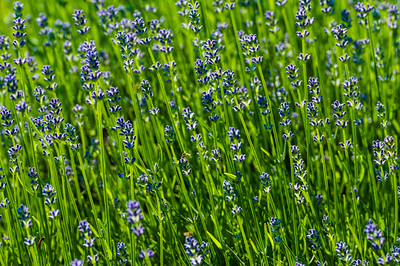 Blue Flowers in the Garden