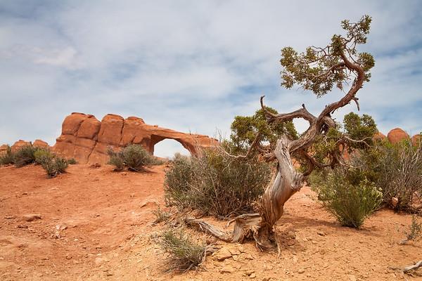 Twister Tree