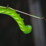 Make Like a Leaf