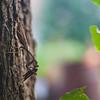 Mantis Prey
