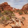 Arch Trail