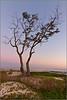 Carpenteria Sunset
