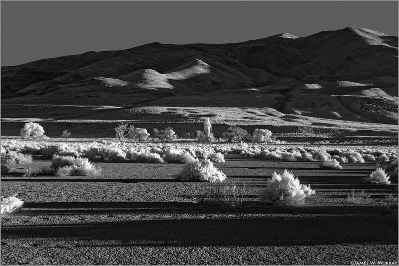 Late Afternoon, Near Pyramid Lake, Nevada . . . [7D.2017.8251-IR]
