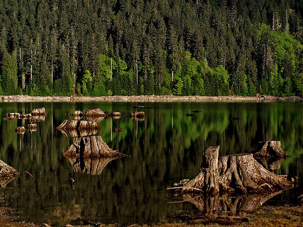 Strathcona Park, B.C.