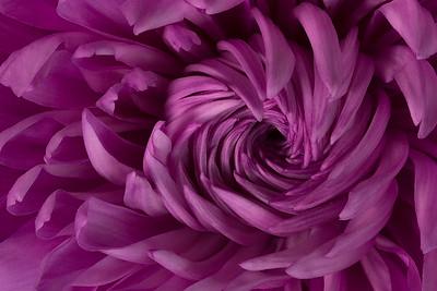 Floral Fibonacci
