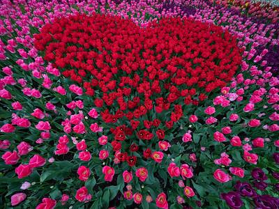 St. Valentine's Garden