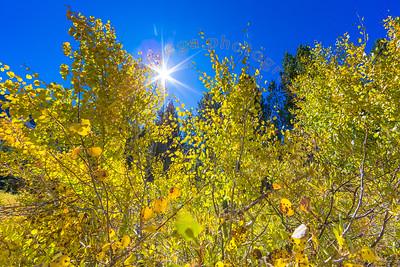 2019 Fall Colors at Rock Creek Canyon Lake 1