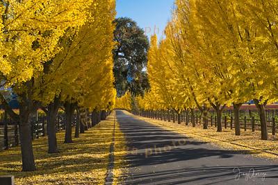 2020 Fall Colors at Far Niente Winery