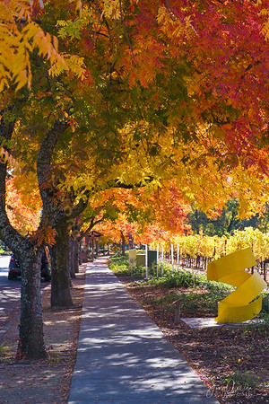 2020 Fall Colors at Yountville