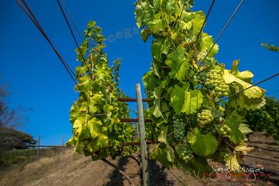 2013 American Canyon Vineyards