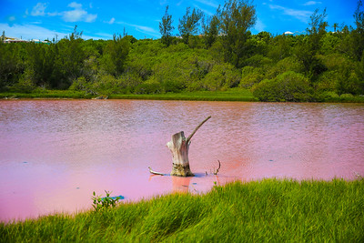 spittal pond in pink