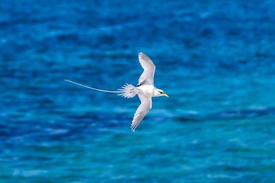 longtails frolicking