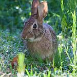 Easter Bunny IMG_8743
