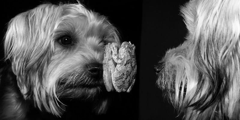Dog & Frog