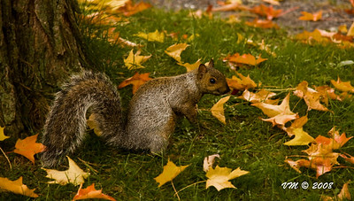 'Now who is going to clean up all these leaves?!'