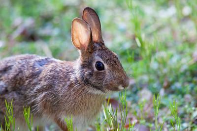 Easter Bunny IMG_8744