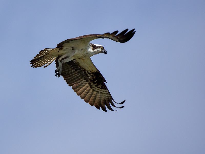 Osprey, British Columbia