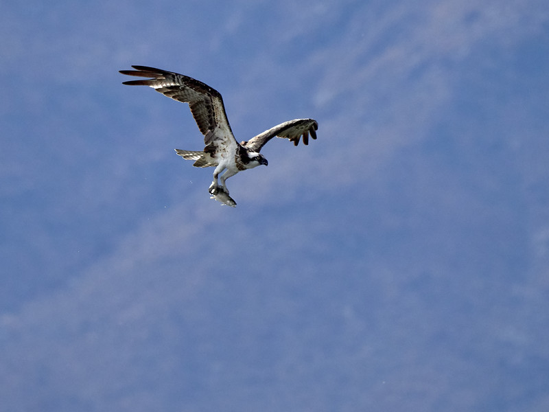 Osprey, Arizona