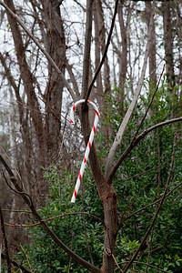 Christmas Cane at Johnson Boat Landing IMG_1261
