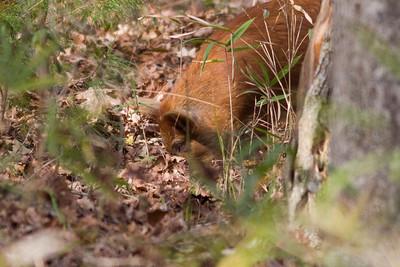 Wild Hog IMG_4376
